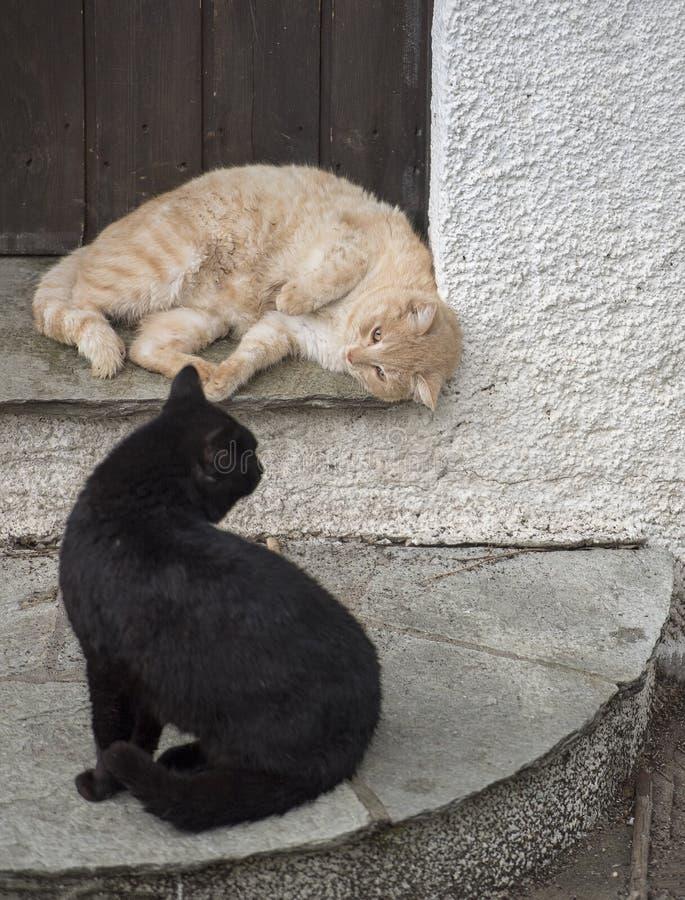 Δύο λατρευτές γάτες που παίζουν από κοινού Γάτες υπαίθριες στοκ φωτογραφίες με δικαίωμα ελεύθερης χρήσης