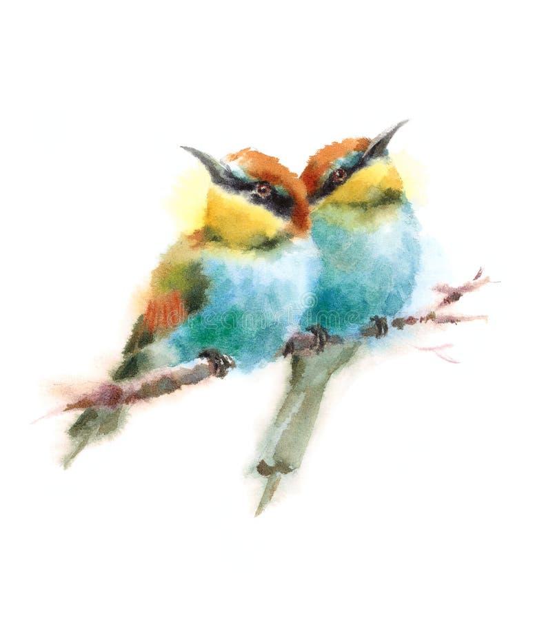 Δύο μέλισσα-τρώγοντες που κοιτάζουν στις αντίθετες κατευθύνσεις που κάθονται στον κλάδο Watercolor δίνουν τη χρωματισμένη απεικόν ελεύθερη απεικόνιση δικαιώματος