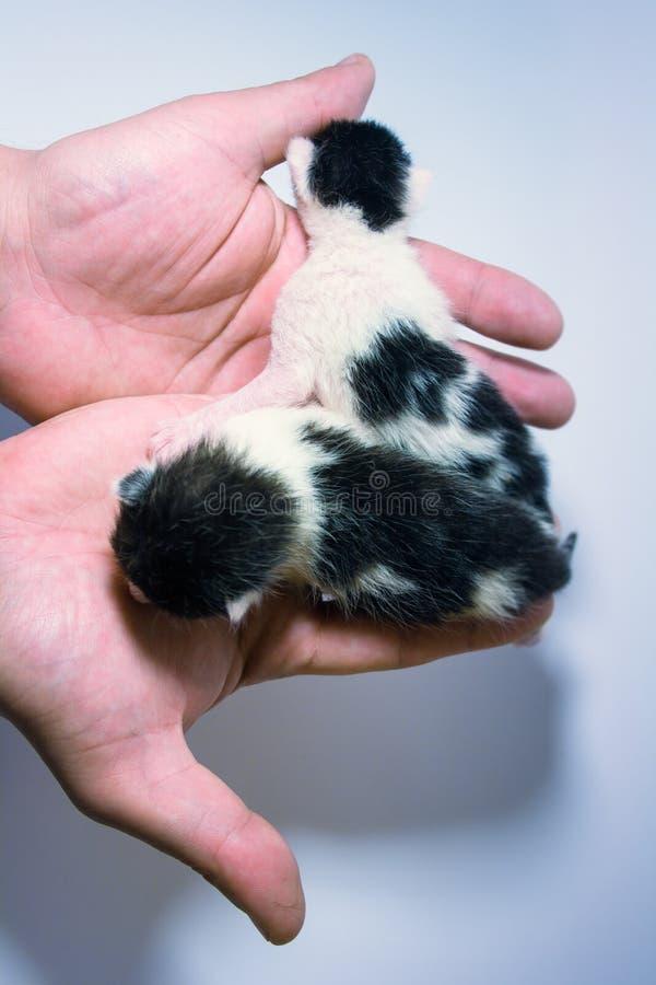 Δύο μικρά γατάκια στο φοίνικα στοκ εικόνα