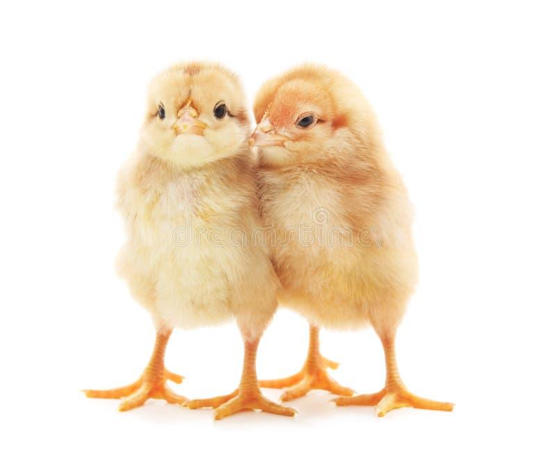 Δύο μικρά κοτόπουλα στοκ εικόνα