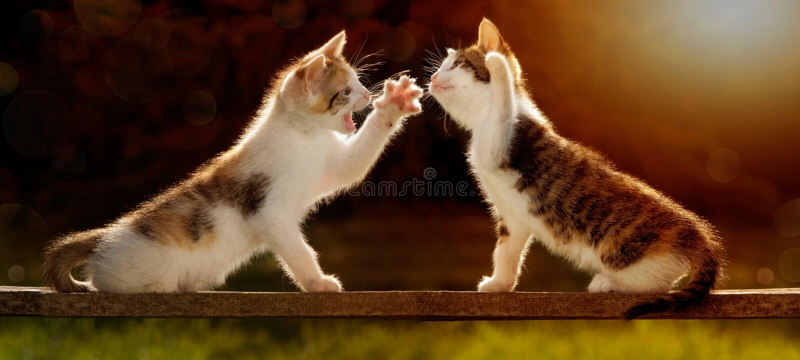 Δύο νέες γάτες που παίζουν σε έναν ξύλινο πίνακα ενάντια στο φως, ακόμα και στοκ φωτογραφία