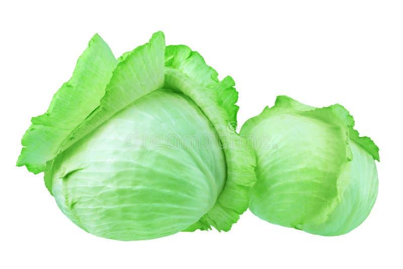 Δύο ολόκληρα κεφάλια του πράσινου φυλλώδους λάχανου στο άσπρο υπόβαθρο απομόνωσαν το μεγάλου και μικρού στρογγυλό ώριμο ευνοούμεν στοκ εικόνες