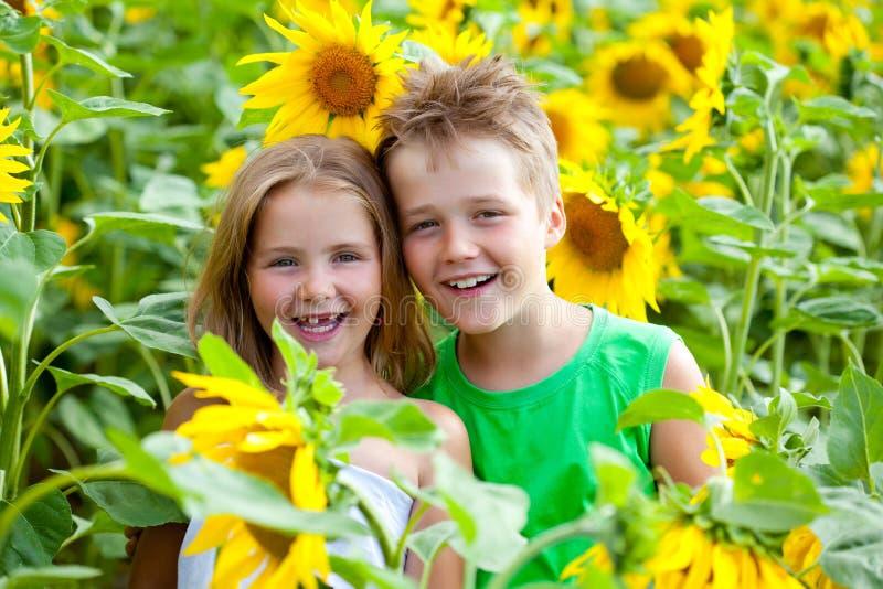 Δύο παιδιά που έχουν τη διασκέδαση μεταξύ του ηλίανθου στοκ εικόνες με δικαίωμα ελεύθερης χρήσης