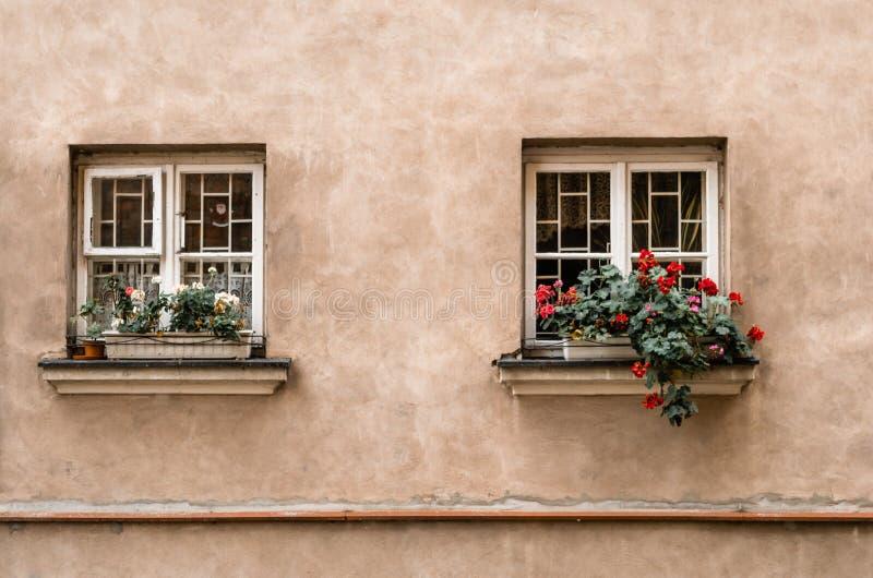 Δύο παράθυρα με τα λουλούδια στο windowsill στο παλαιό φως οικοδόμησης στοκ εικόνες