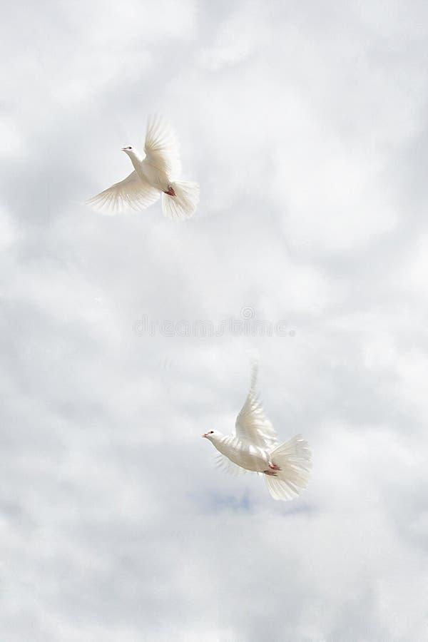 Δύο περιστέρια που πετούν στον ουρανό στοκ φωτογραφία