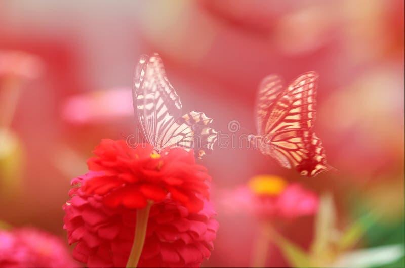 Δύο πεταλούδες στα κόκκινα λουλούδια στοκ εικόνα