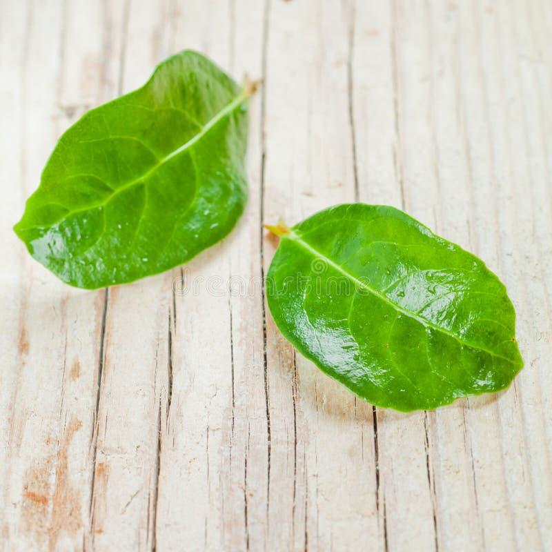 Δύο πράσινα υγρά φύλλα στοκ φωτογραφία