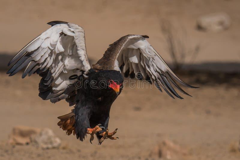 Δύο πόδια που προσγειώνονται με τα φτερά στοκ φωτογραφίες