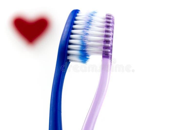 Δύο ροζ και μπλε οδοντόβουρτσες απομονωμένες σε λευκό φόντο ιδέα αγάπης για τη γιορτή του αγίου βαλεντίνου στοκ εικόνες με δικαίωμα ελεύθερης χρήσης