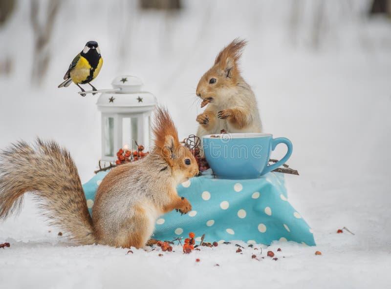 Δύο σκίουροι και ένα βακκίνιο τρώνε τα καρύδια στοκ φωτογραφία με δικαίωμα ελεύθερης χρήσης