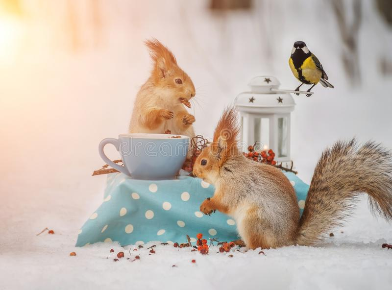 Δύο σκίουροι και ένα βακκίνιο τρώνε τα καρύδια στοκ εικόνα