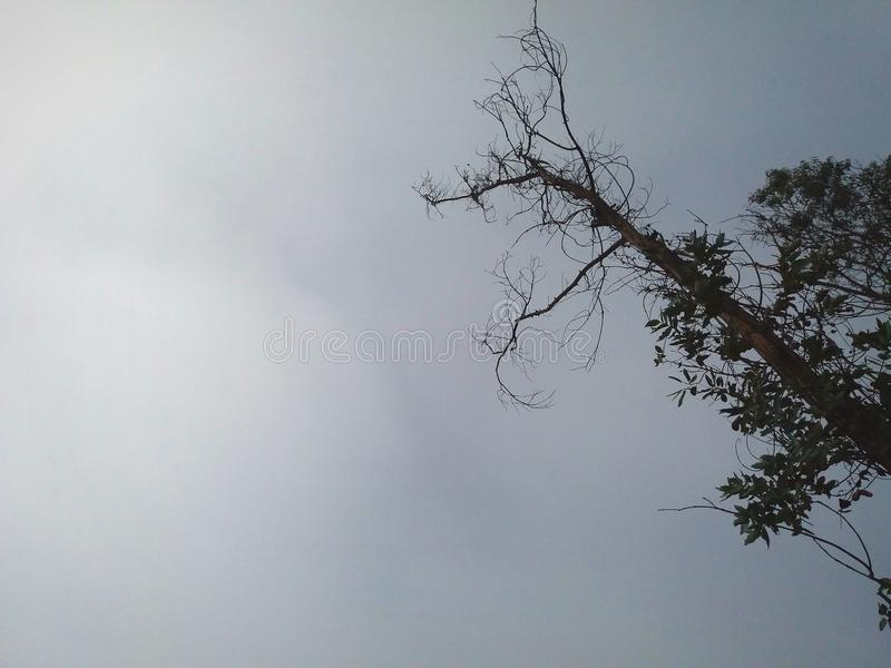 Δύο σκιαγραφίες των δέντρων και του φυλλώματος και των κλάδων τους στοκ φωτογραφίες με δικαίωμα ελεύθερης χρήσης