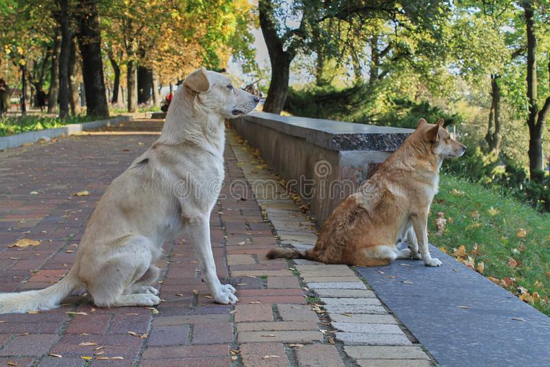 Δύο σκυλιά κάθονται στο δρόμο και εξετάζουν την απόσταση Κινηματογράφηση σε πρώτο πλάνο στοκ εικόνες