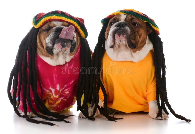 δύο σκυλιά με το dreadlock στοκ φωτογραφία με δικαίωμα ελεύθερης χρήσης