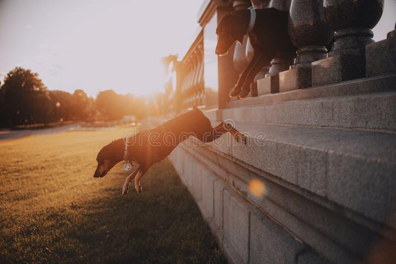 Δύο σκυλιά πηδούν για έναν περίπατο στοκ φωτογραφίες με δικαίωμα ελεύθερης χρήσης