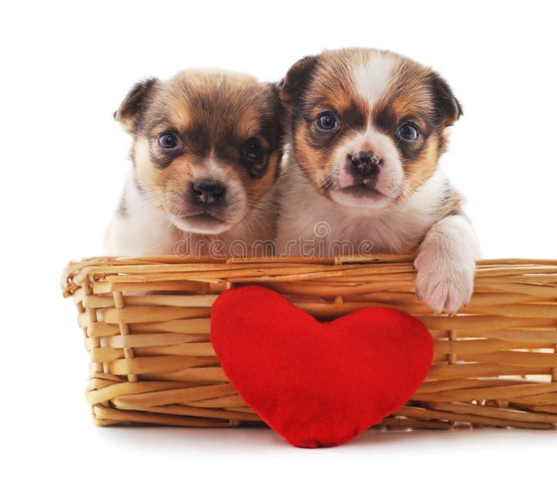 Δύο σκυλιά σε ένα καλάθι στοκ εικόνες με δικαίωμα ελεύθερης χρήσης
