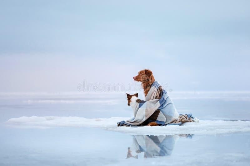 Δύο σκυλιά που κάθονται στον πάγο στοκ φωτογραφία με δικαίωμα ελεύθερης χρήσης