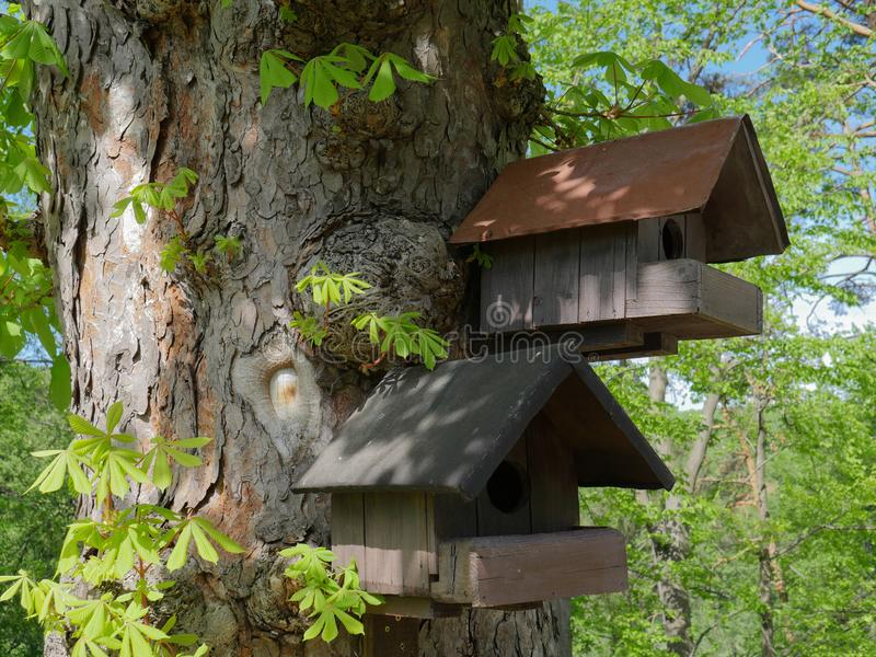Δύο σπίτια δέντρων σκιούρων ελεύθερη απεικόνιση δικαιώματος