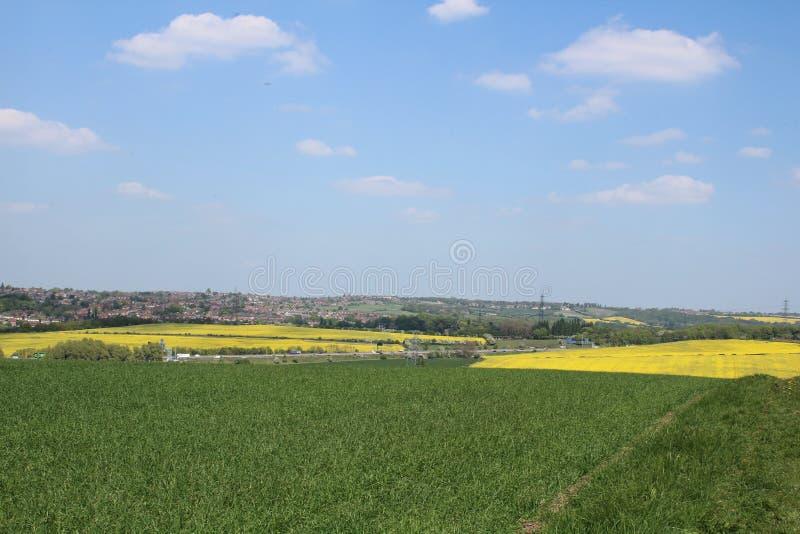 Δύο τομείς βιασμών ελαιοσπόρων πέρα από το καλλιεργήσιμο έδαφος Treeton στοκ φωτογραφία με δικαίωμα ελεύθερης χρήσης