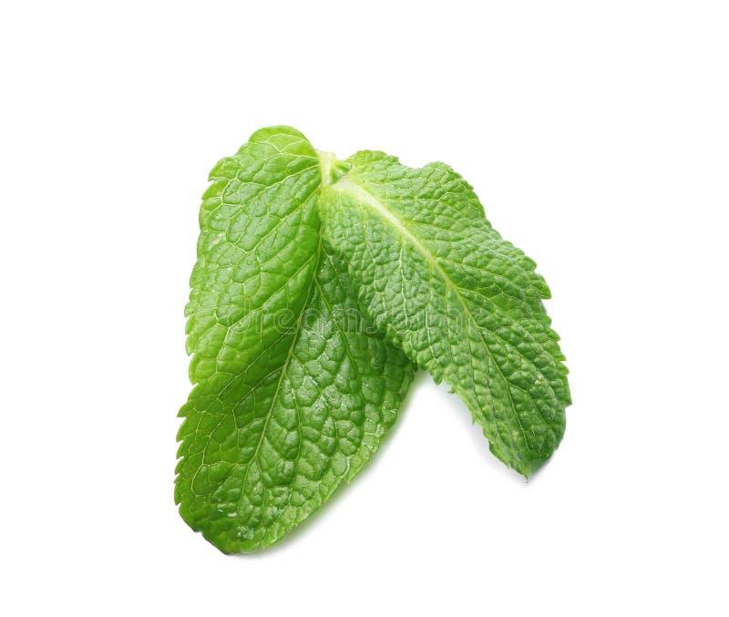 Δύο υγρά πράσινα φύλλα που απομονώνονται στοκ εικόνα με δικαίωμα ελεύθερης χρήσης