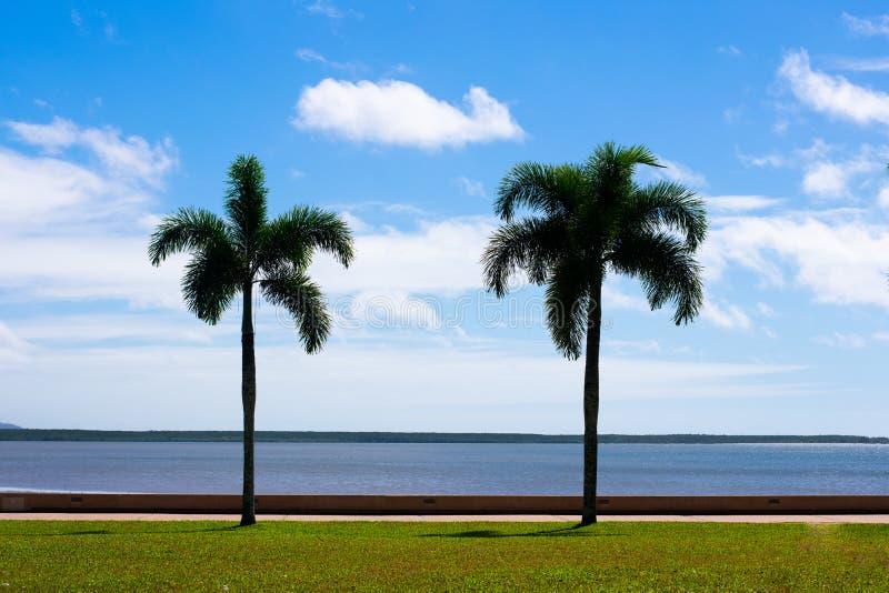 Δύο φοίνικες στην παραλία στοκ εικόνες με δικαίωμα ελεύθερης χρήσης