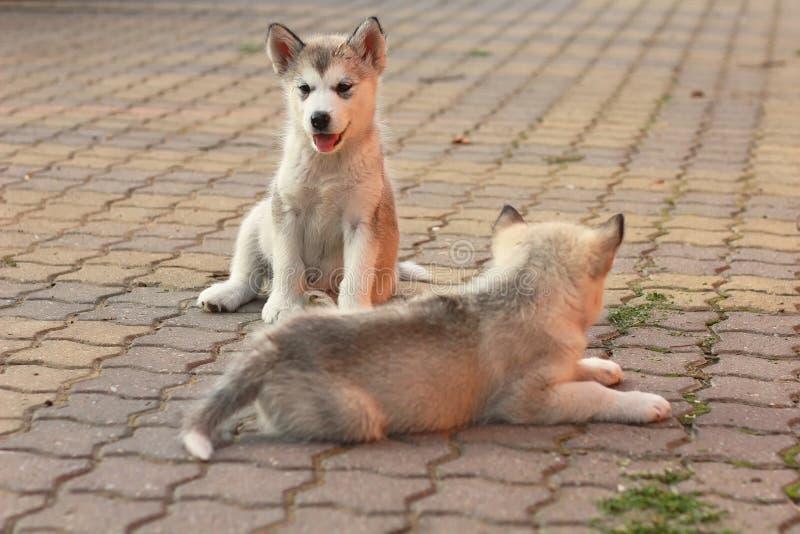 Δύο χαριτωμένα σκυλιά στοκ φωτογραφίες