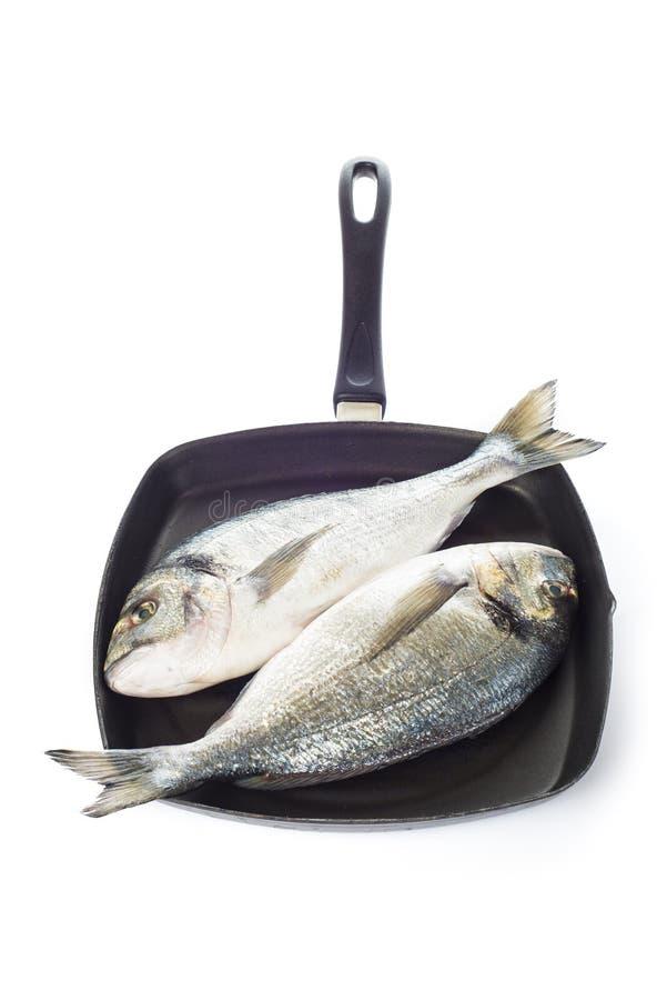 Δύο χοιρομητέρα-επικεφαλής ψάρια τσιπουρών σε ένα τηγάνι που απομονώνεται στοκ φωτογραφία με δικαίωμα ελεύθερης χρήσης