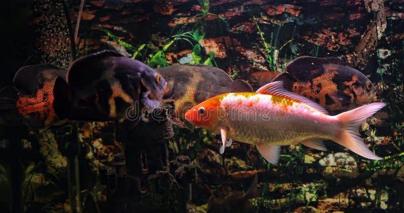Δύο ψάρια στοκ εικόνες