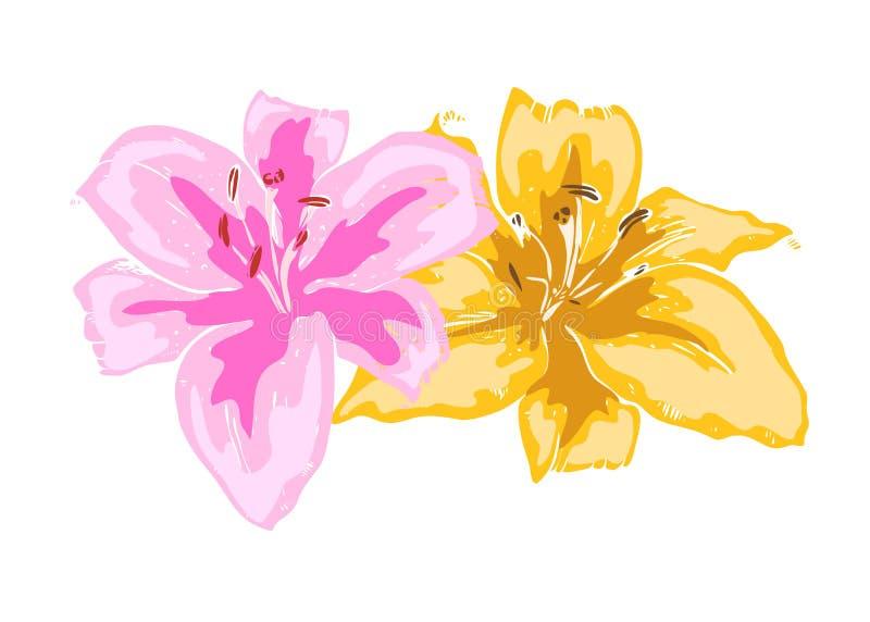 Δύο όμορφα λουλούδια κρίνων Απεικόνιση των μεγάλων κρίνων που απομονώνεται στο άσπρο υπόβαθρο συρμένο διάνυσμα χεριών Floral συλλ ελεύθερη απεικόνιση δικαιώματος