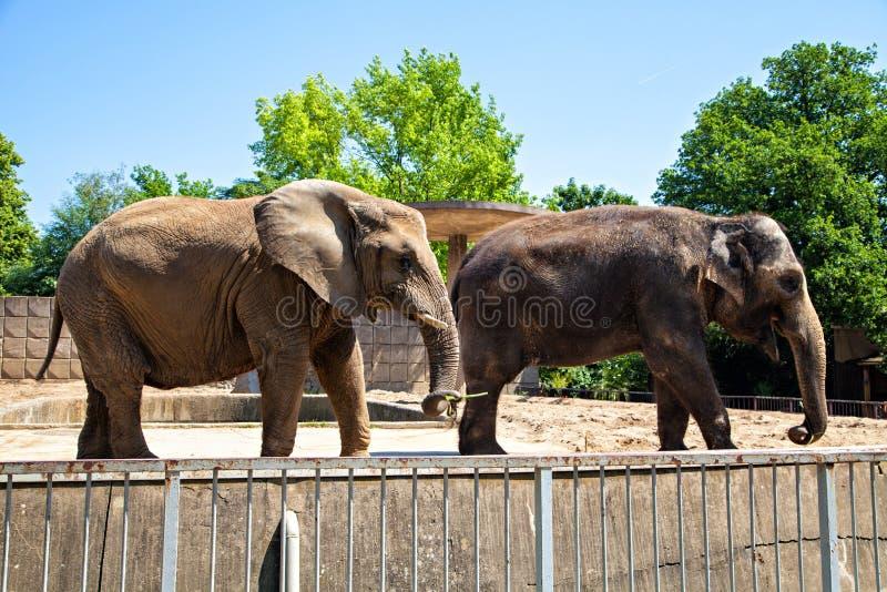 Δύο elefants στοκ εικόνες