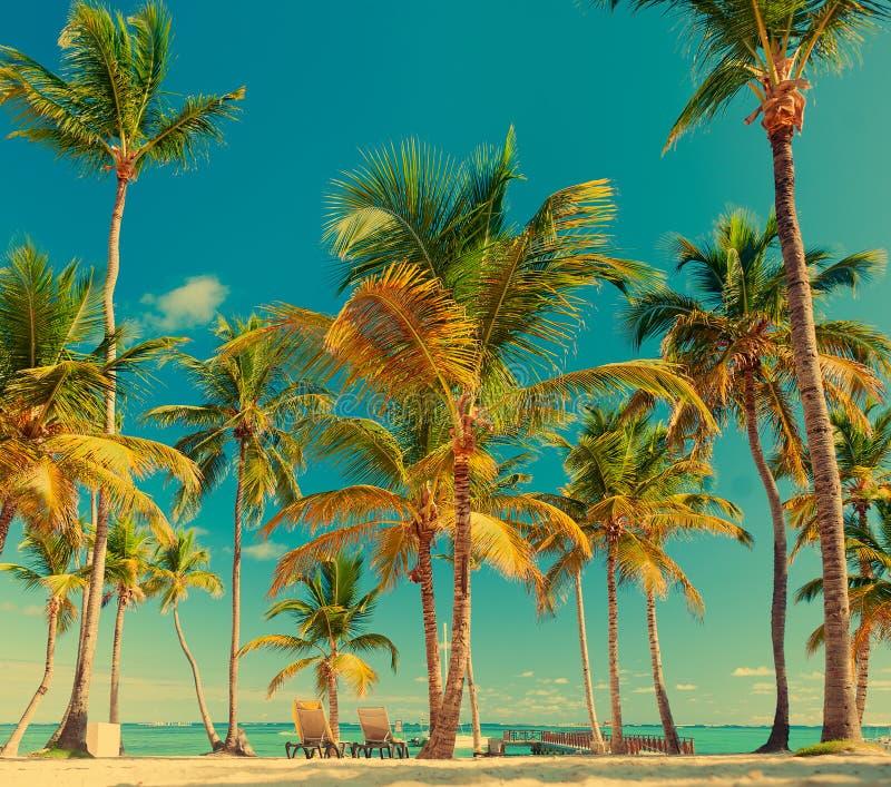 Δύο sunbeds στην παραλία κάτω από τους φοίνικες Όμορφη ωκεάνια άποψη Τροπική πρασινάδα στοκ φωτογραφίες με δικαίωμα ελεύθερης χρήσης