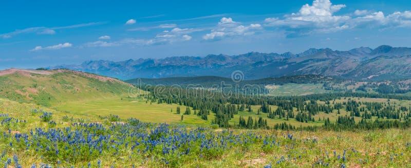 Δύσκολο καλοκαίρι Wildflowers βουνών στοκ φωτογραφία