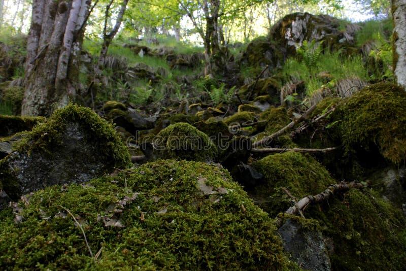 Δύσκολη δασώδης περιοχή στη Νορβηγία στοκ εικόνες