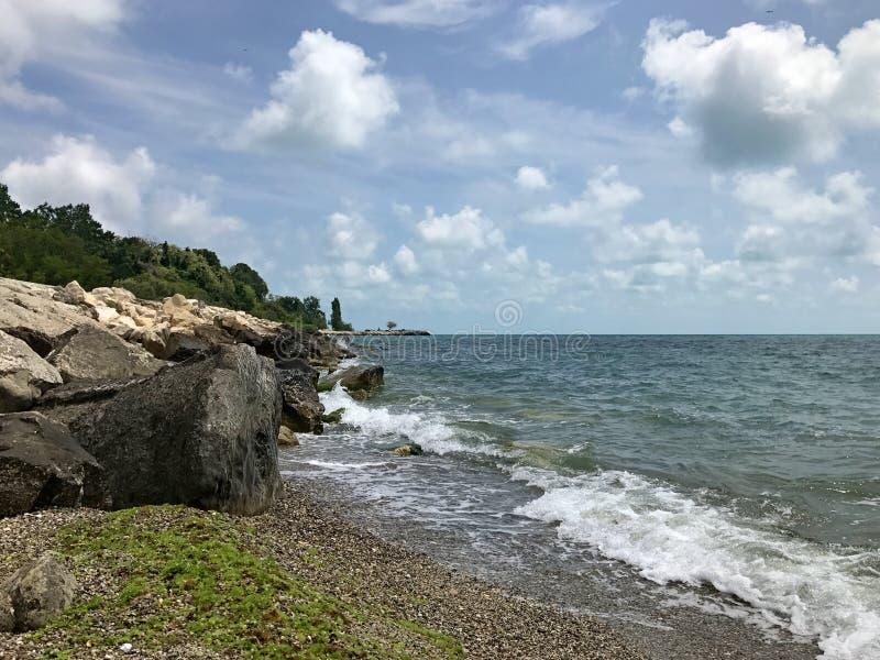 Δύσκολη παραλία με το φύκι στοκ εικόνες με δικαίωμα ελεύθερης χρήσης