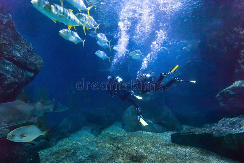 Δύτες που εξερευνούν τα ψάρια υποβρύχια στη θάλασσα στοκ εικόνα