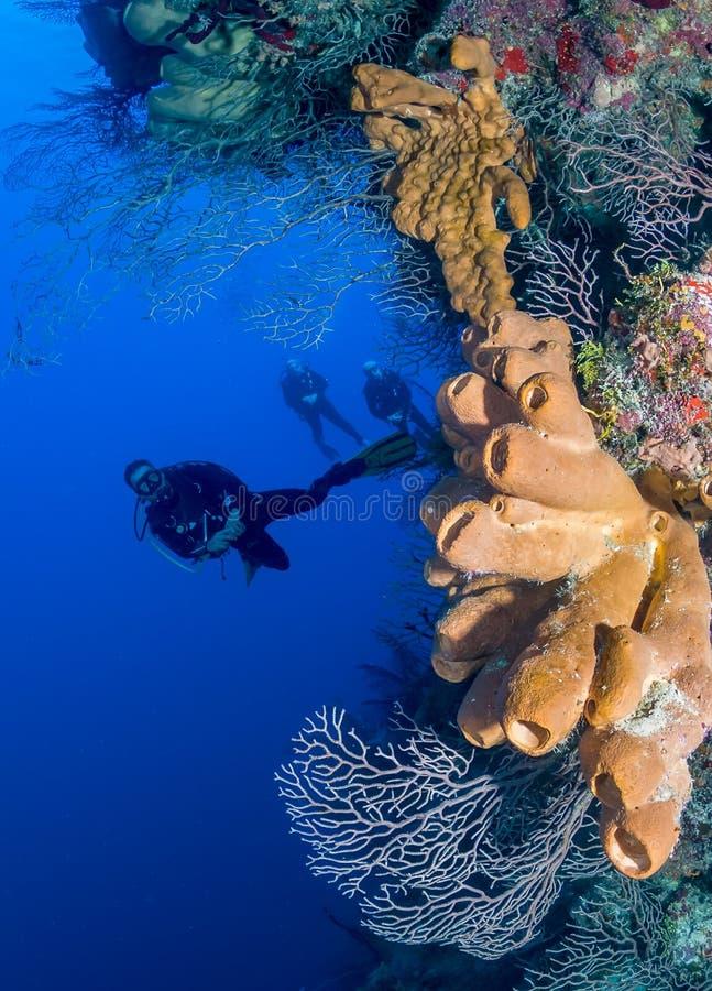 Δύτες ΣΚΑΦΑΝΔΡΩΝ σε μια βαθιά κοραλλιογενή ύφαλο στοκ φωτογραφία με δικαίωμα ελεύθερης χρήσης
