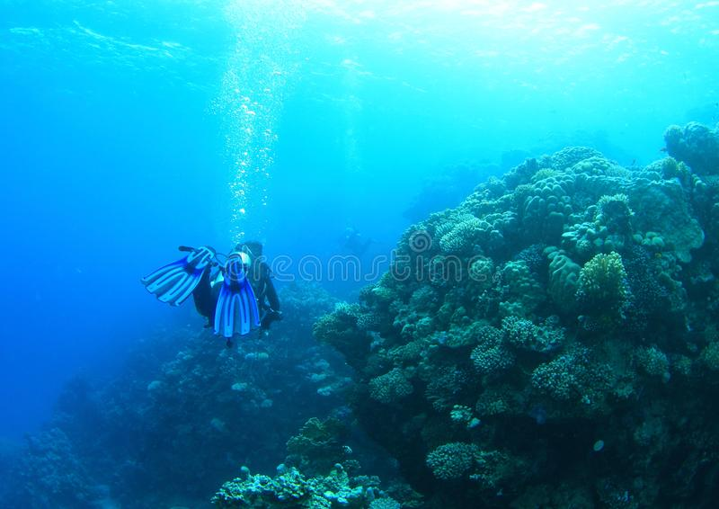 Δύτης - κορίτσι υποβρύχιο στοκ φωτογραφίες