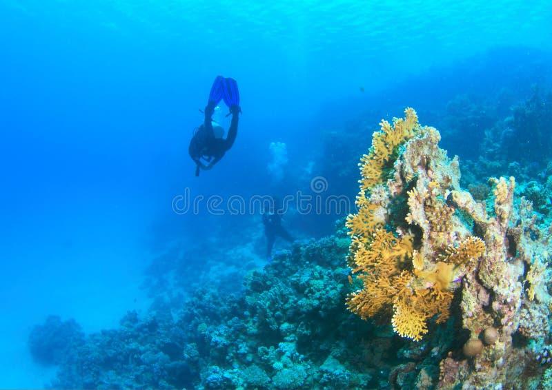 Δύτης - κορίτσι υποβρύχιο στοκ εικόνες με δικαίωμα ελεύθερης χρήσης
