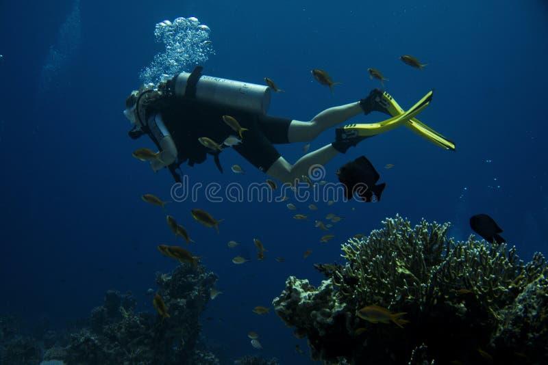 δύτης Κοραλλιογενής ύφαλος στοκ εικόνες