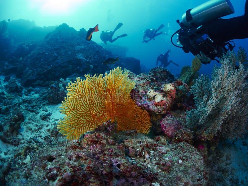 Δύτης με το κοράλλι στοκ φωτογραφίες