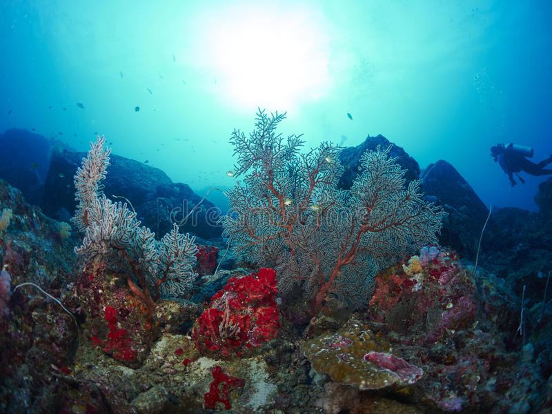 Δύτης με το κοράλλι στοκ εικόνες