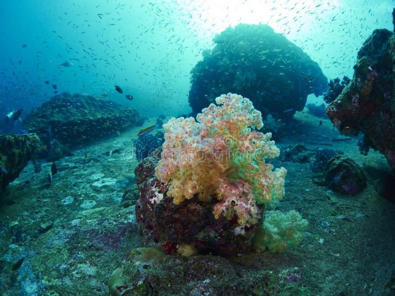 Δύτης με το κοράλλι στοκ εικόνα με δικαίωμα ελεύθερης χρήσης