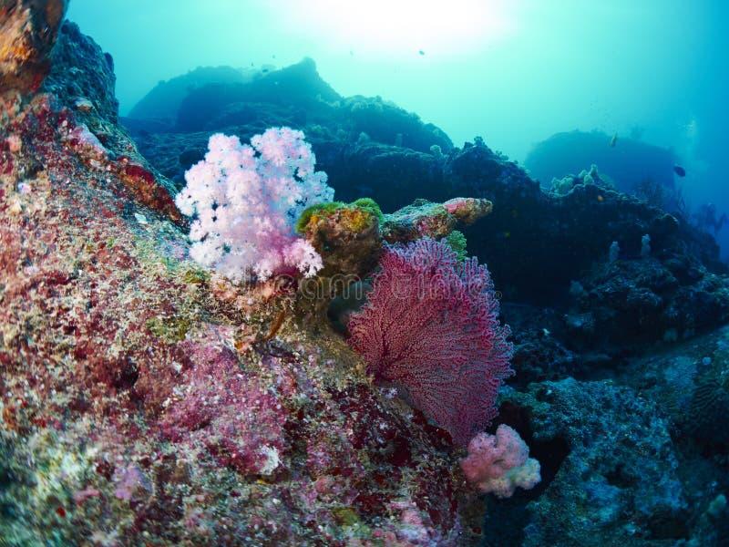 Δύτης με το κοράλλι στοκ φωτογραφία