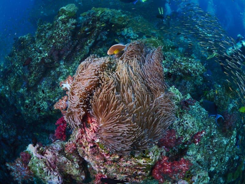 Δύτης με το κοράλλι στοκ εικόνα