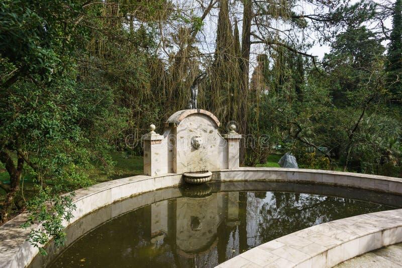 Δύτης πισινών στην ημέρα παραθεριστικών πόλεων δενδρολογικών κήπων πάρκων την άνοιξη στοκ φωτογραφίες