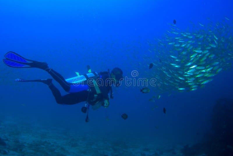 Δύτης σκαφάνδρων με τα κίτρινα ψάρια υποβρύχια στοκ εικόνες