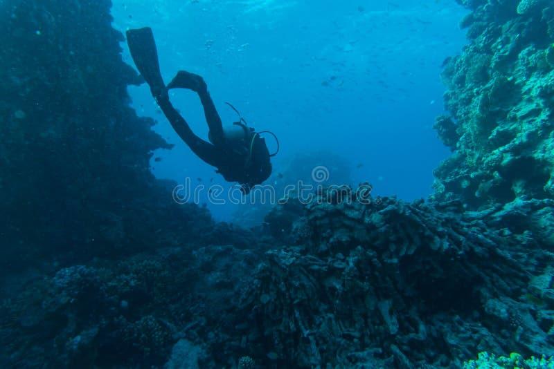Δύτης σκαφάνδρων, τροπικά ψάρια και κοραλλιογενής ύφαλος στη θάλασσα υποβρύχια στοκ εικόνες