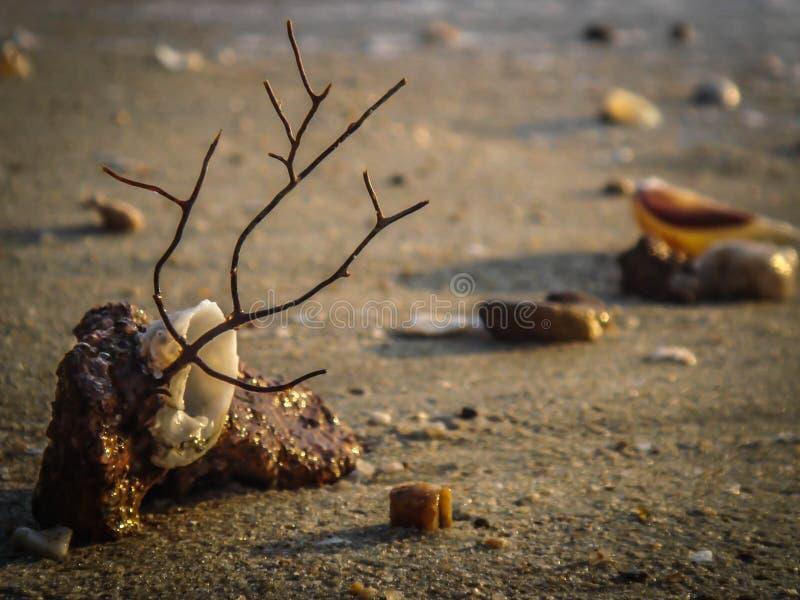 Δώρο από τη θάλασσα στοκ εικόνα με δικαίωμα ελεύθερης χρήσης