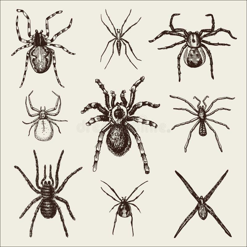 Είδη αραχνών ή arachnid, τα περισσότερα επικίνδυνα έντομα στον κόσμο, τον παλαιό τρύγο για αποκριές ή το σχέδιο φοβίας συρμένο χέ διανυσματική απεικόνιση