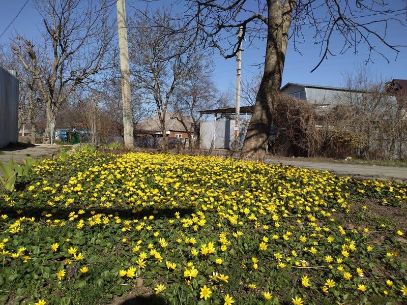 Είναι άνοιξη Φωτεινά λουλούδια στοκ φωτογραφία με δικαίωμα ελεύθερης χρήσης